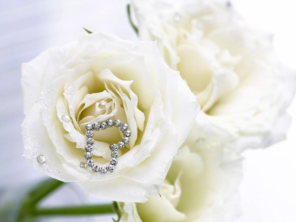 Обои Белые розы с сердцем на лепестках.